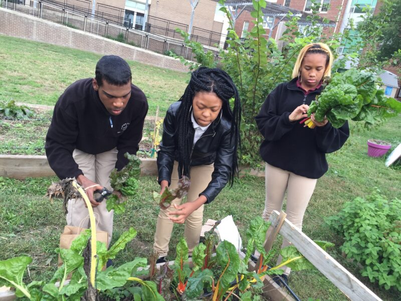 Three students work in the school garden